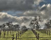 Spring Storm, Amador County Vineyards