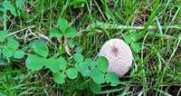 Cute small withe mushroom