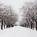 """Winter Road"" by LunarImage"