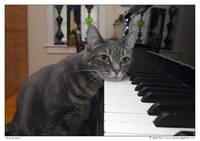 Nora The Piano Cat™ - n0010