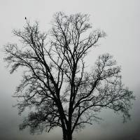 November Tree In Fog Art Prints & Posters by Patricia Motley