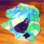 """Binx in His Pillowcase"" by Starfire"