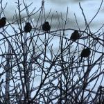 """""""Winter Sparrows"""" by karolsstuff"""