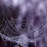 """Glistening Web"" by karolsstuff"