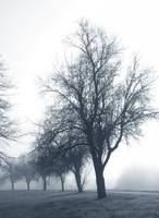 Blue Foggy Trees