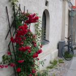 """Visby Roses"" by Sam_Turgeon"