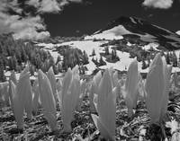 Highland Lakes Infrared