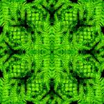 """Green Fern Geometric"" by myikpix"