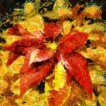 """Pointsettia"" by impressionistheart"