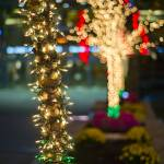 """bokeh tree"" by easyshutter"