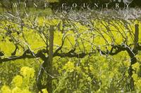 Dormant Vines and Mustard