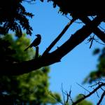 """Silhouette of Bird"" by AlluringDigital"