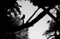 Silhouette of Bird in B&W
