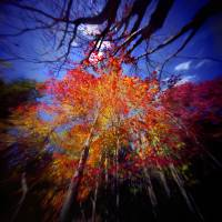 """Fall Leaves"" by Scott Speck"