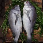 """Fresh Fish"" by bryantighe"