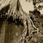 """Angkor Tree"" by TwoWorldGallery"