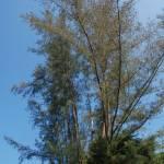 """Tree with Sky"" by Dilanka"