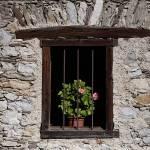 """""""Geranium Jail, Cibiana di Cadore"""" by davidhowell"""
