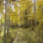 """Golden Path"" by SandCreekVentures"
