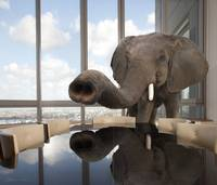 Classic photo of the elephant in the room