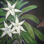 """Angraecum sesquipedale"" by kirke"