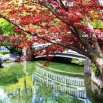 """Springtime Bridge"" by Groecar"