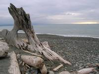 Drift Wood and Strait of Juan de Fuca