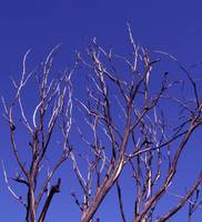 Branches on Blue.