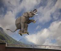 Photo of Asian elephant catching air, skateboard