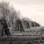 """""""Amish Cornstacks"""" by redhawk45"""