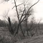 """Old Swamp Tree"" by redhawk45"