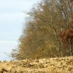 """Treeline"" by redhawk45"