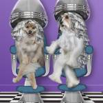 """Dogs at hair salon getting highlights and chatting"" by StephanieDRoeser"