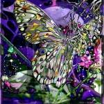 """MoonStruck Butterfly"" by Nicolemarques"