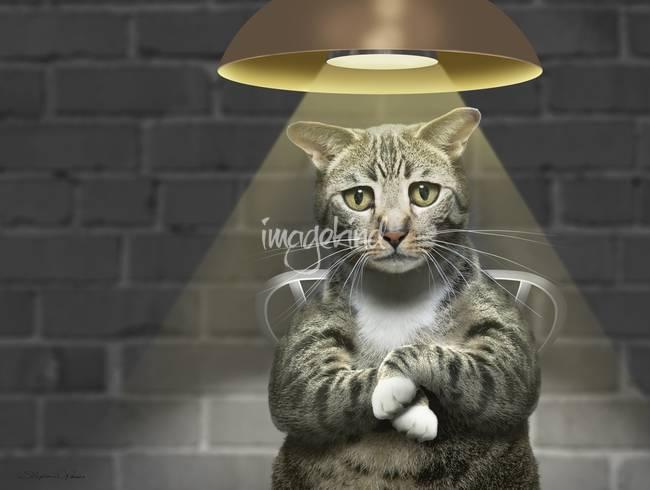 Funny photo of guilty tabby cat interrogation?v1291808460 - چٹرز پٹرز کے چیکو پہ ایک قاتلانہ حملہ (Dabang Mukablaa 3)