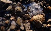 Ice, pebbles and leaf
