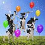 """Holstein cows dance party in grassy sunny meadow"" by StephanieDRoeser"