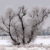 Winter Wonderland Art Prints & Posters by kristysphotography