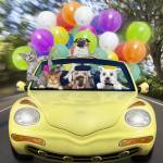 """Cats and dogs driving fast in convertible car"" by StephanieDRoeser"