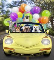 Cats and dogs driving fast in convertible car