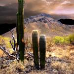 """Los Saguaroitos"" by Ciro"