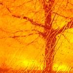 """Mandarin-Orange-Colored Tree of Hope"" by Barbara_Stock"