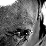 """Horse Eye"" by broken_lantern"