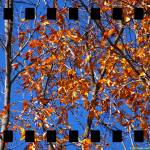 """Study of Leaves 1"" by timothycook"
