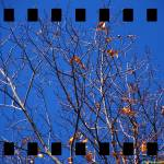 """Study of Leaves 2"" by timothycook"