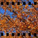 """Study of Leaves 3"" by timothycook"