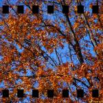 """Study of Leaves 4"" by timothycook"