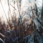 """Shades of Grass"" by jddean"
