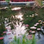 """""""The Pond"""" by jddean"""