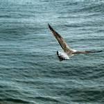 """""""taking flight"""" by crystalliora"""